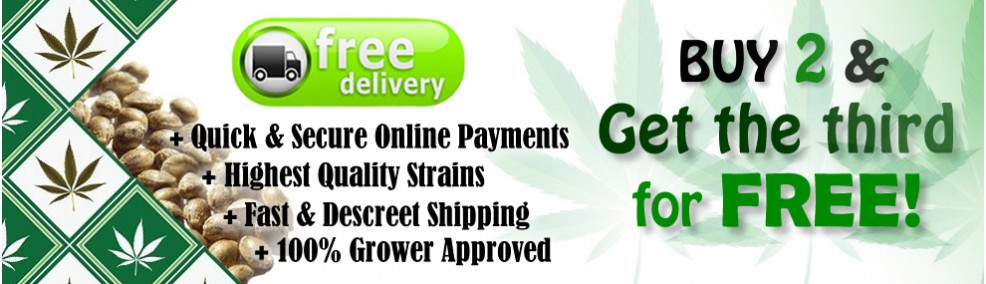 Buy 2 Get 1 FREE! Plus Free Shipping